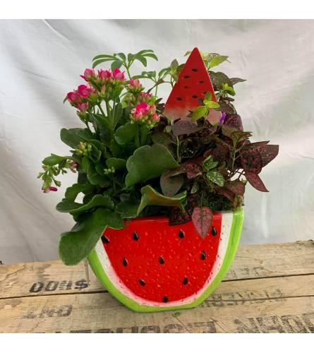 Watermelon Planter Garden