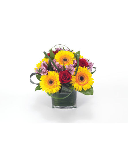 Gerbera Party by Bloomnet at Bow River Flower Atelier