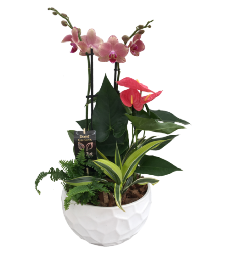 Extra Large Tropical Planter with Orchid