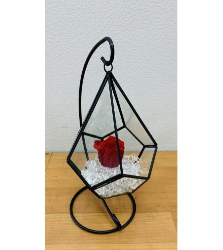 Preserved Ecuadorian Red Rose