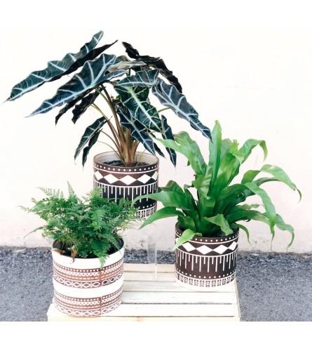 Geo Tropic Plant