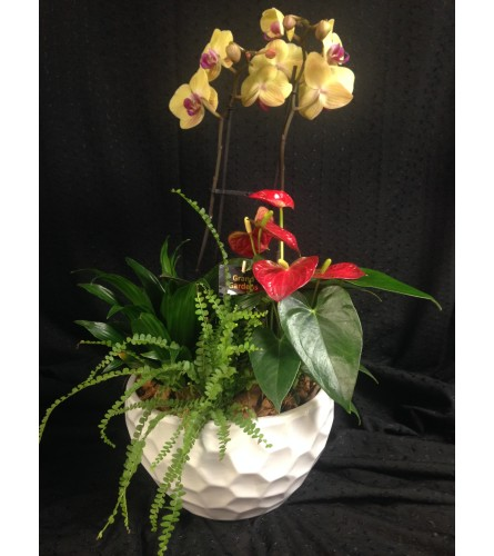 round orchid and anthurium planter