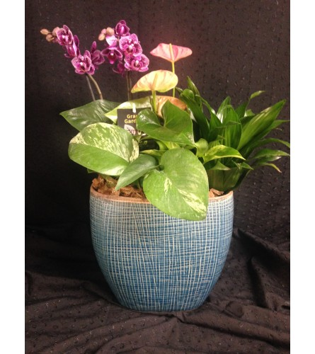 oval orchid and anthurium planter