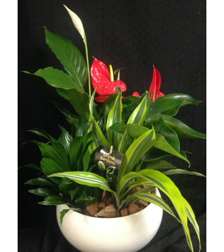 round peace lily and anthurium planter