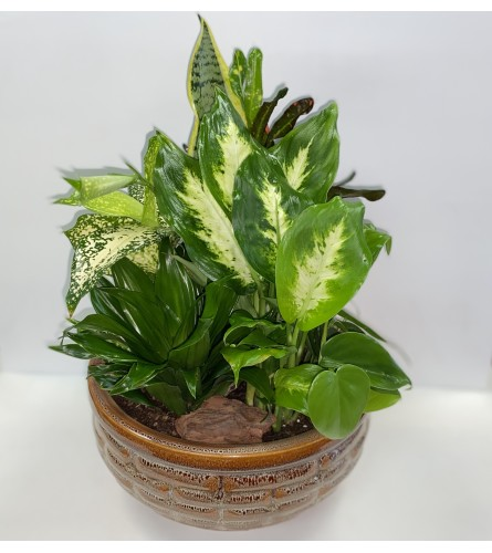 Indoor Ceramic Planter