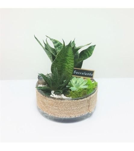 Burlap Bliss Succulent Planter
