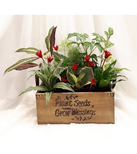Plants in Wooden Box