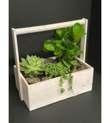 Garden Succulent Box