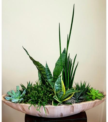 Caramel Boat Succulent