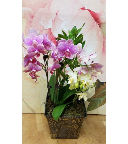 petite orchid garden by Twigs