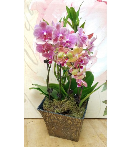 petite orchid gardens by Twigs