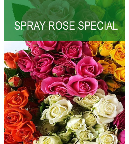 Wrapped Spray Rose Special