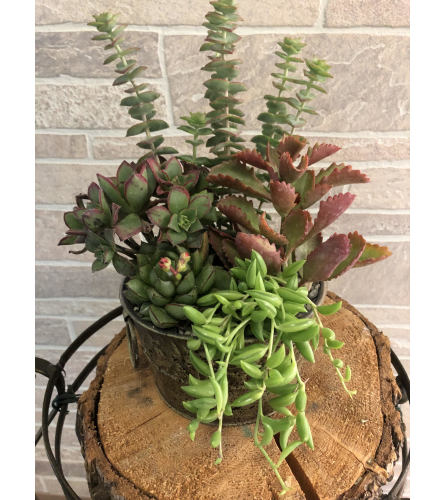 Medium Succulent Garden Tin
