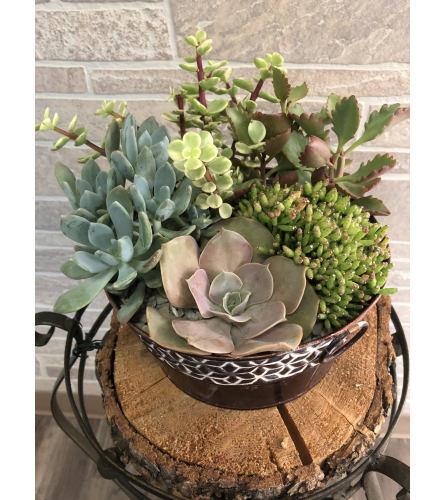 Large succulent garden tin
