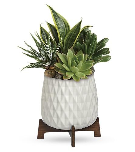 Modern Mood Succulent Planter