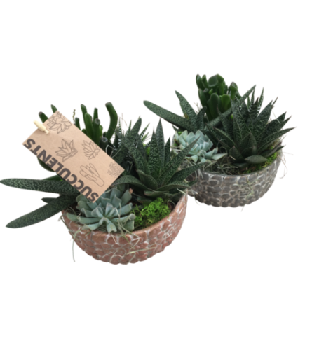 Small Pebble Succulent Planter