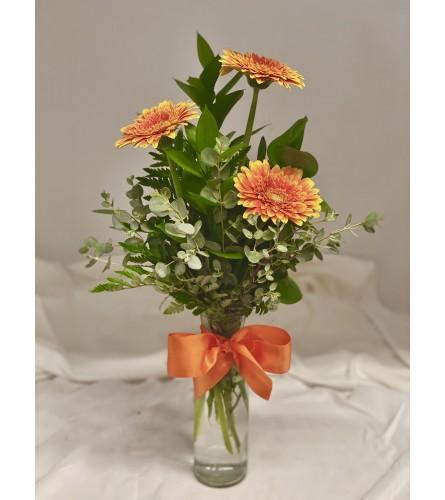 Triple Gerbera Vase