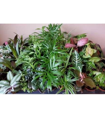 Green House plants assortment