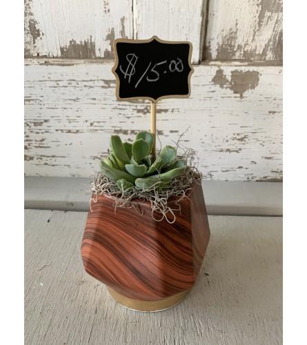 Faux Wood Vase with Succulent