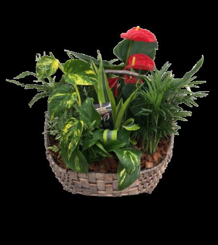 Giant Wicker Basket Planter