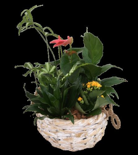 Round Wicker Planter Basket