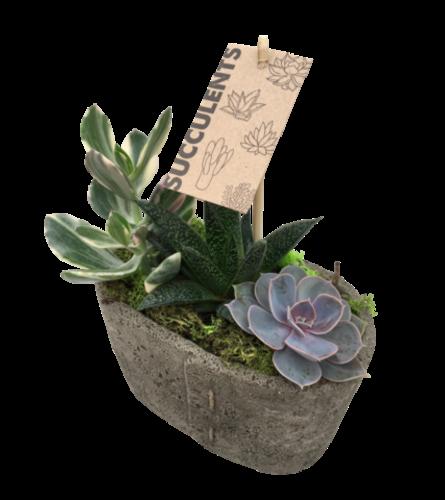 Stitched Succulent Planter