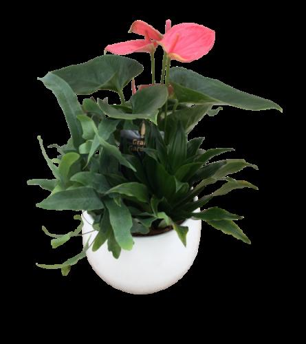 Round Anthurium Planter
