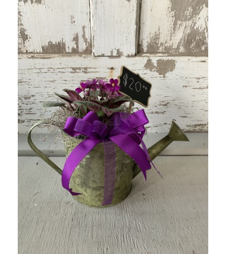Watering Can with African Violet