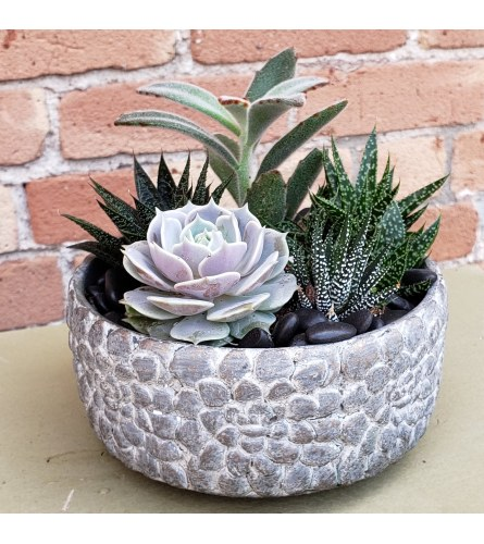 succulent pebble bowl