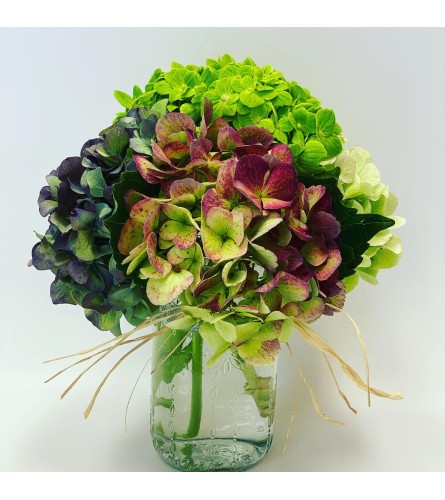 Antique Hydrangea in Mason Jar