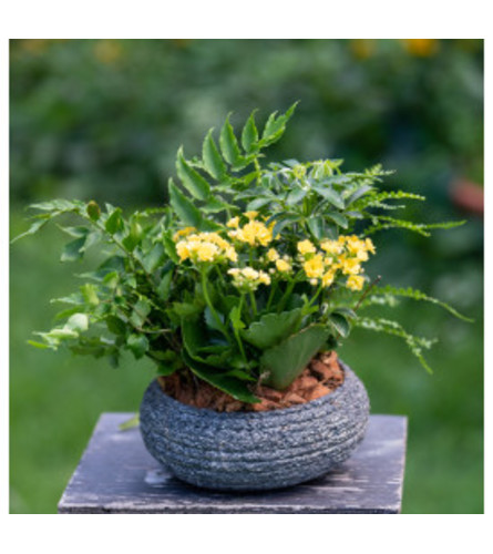 Planter in Stone Bowl