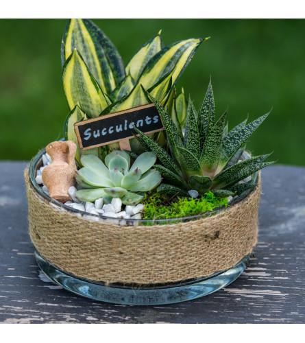 Succulent Garden in Burlap Container