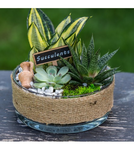 Succulent Planter in Deco