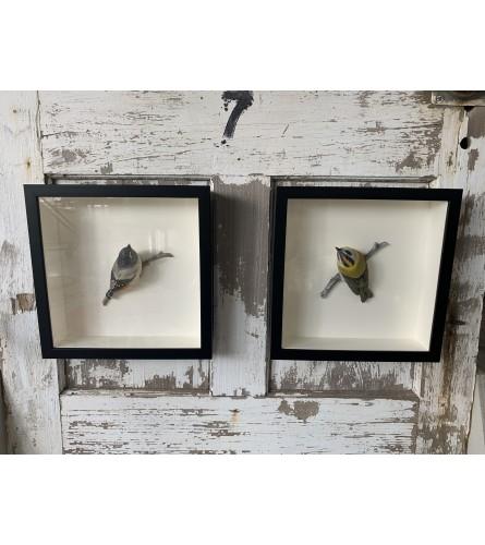 3D Bird Frame