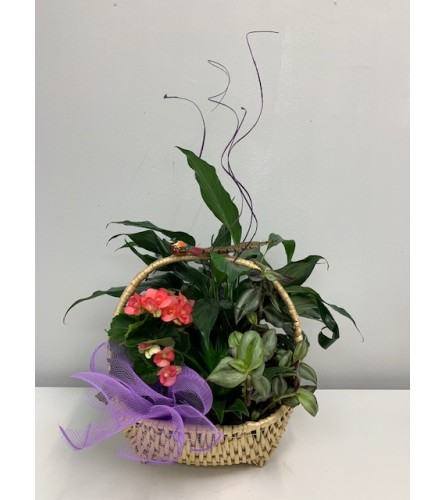 Everyday Special  Planter Basket