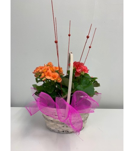 Contemporary Flowering Basket
