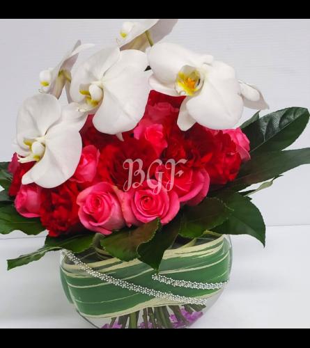 Eclectic Phalaenopsis