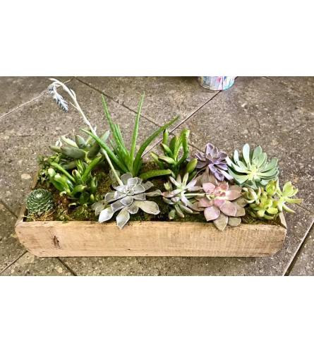 country Succulent Garden