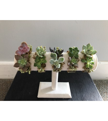 Succulent Corsage (Different Styles Shown)