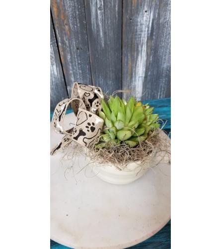 Succulent for Pet