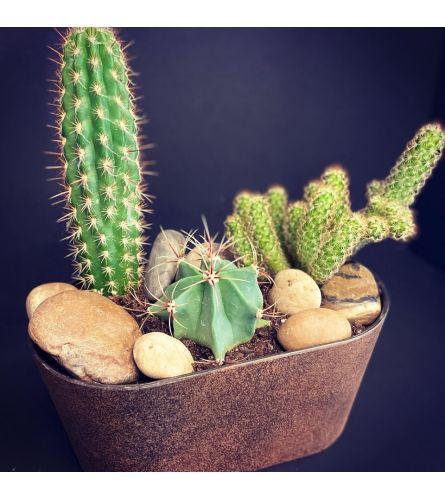 Desert Garden Planter