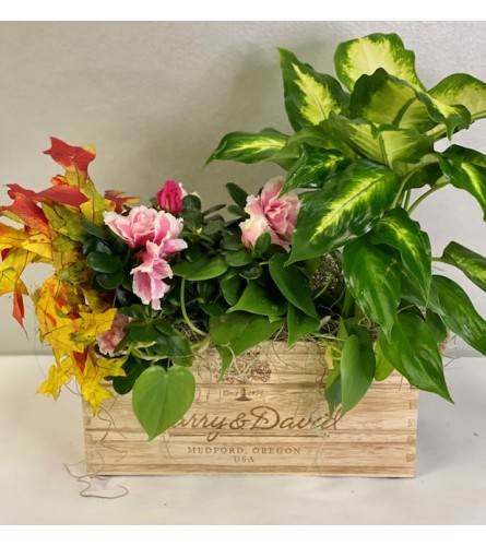Green Plant Box