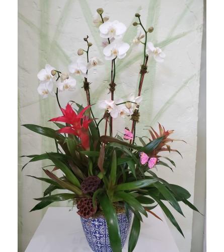 Tropic Orchid Garden