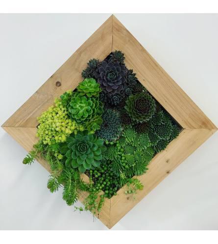 Living Succulent Box