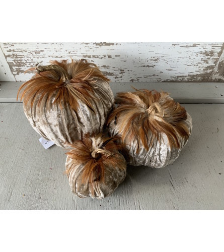 Velvet Feather Pumpkins