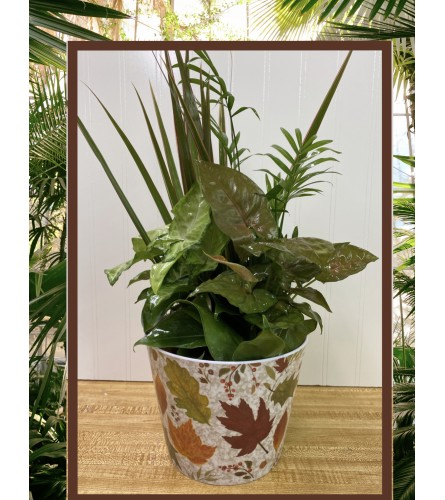 Variety of Green Plants in Autumn Container