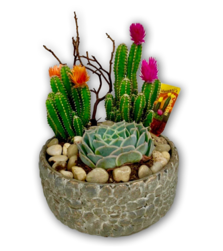 Cactus Dish Garden 2020