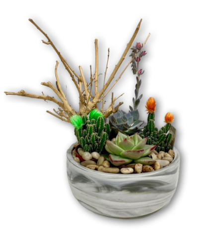 Desert Succulent Cactus Garden in Grey & White Marbled Pot
