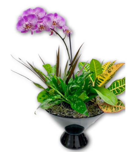Precious Purple & White Orchid in Glass Dish Garden