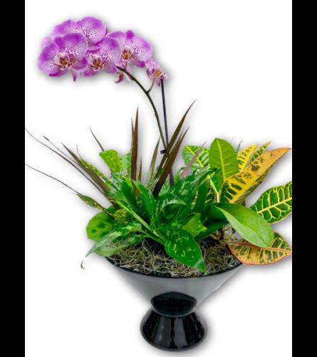 Precious Purple & White Orchid in Glass Dish Garden